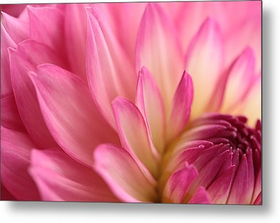 Enticement Metal Print by Connie Handscomb