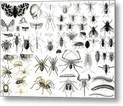 Entomology Myriapoda And Arachnida  Metal Print by English School