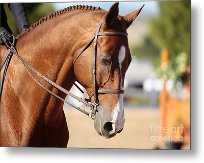 Metal Print featuring the photograph Equestrian Grace by Lincoln Rogers