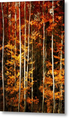 Metal Print featuring the photograph Equilibre by Philippe Sainte-Laudy