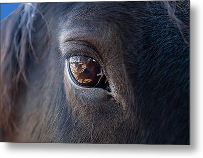Equine In Sight Metal Print by Sheryl Cox