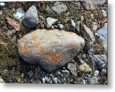 Erratic With Lichens Metal Print
