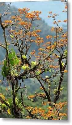 Erythrina Poeppigiana Tree And Epiphytes Metal Print by Bob Gibbons