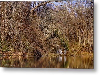 Escape From Reality  Metal Print by Debra Forand