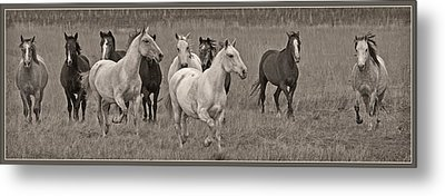 Escapees From A Lineup Metal Print by Wes and Dotty Weber