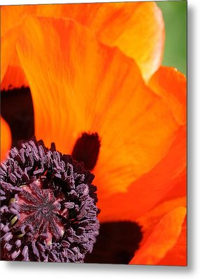 Essence Of Poppy Metal Print by  Andrea Lazar