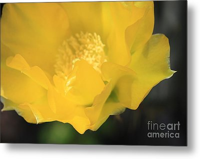 Essence Of Yellow Metal Print by Cathy Dee Janes