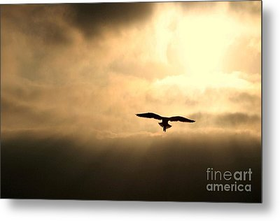 Metal Print featuring the photograph Eternal White Light by Polly Peacock