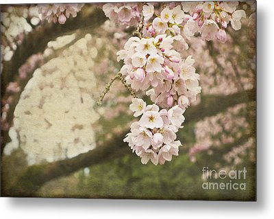 Ethereal Beauty Of Cherry Blossoms Metal Print by Maria Janicki