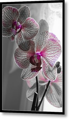 Ethereal Orchid Metal Print