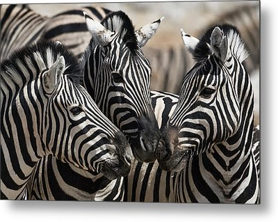 Etosha National Park Metal Print