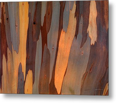Eucalyptus Form 6 Metal Print