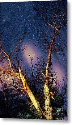 Eucalyptus Night Tree Metal Print by Petros Yiannakas