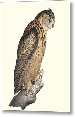 Eurasian Eagle-owl, 19th Century Artwork Metal Print by Science Photo Library