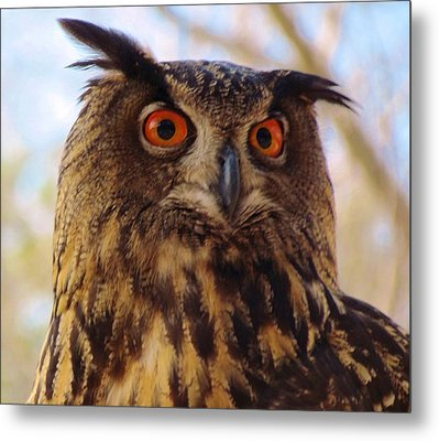 Metal Print featuring the photograph Eurasian Eagle Owl by Cynthia Guinn