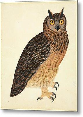 Eurasian Eagle-owl Metal Print by Natural History Museum, London