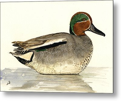 Eurasian Teal Metal Print by Juan  Bosco