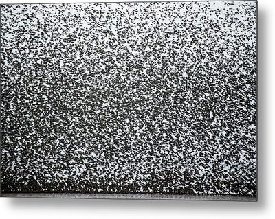 European Starling Flock Metal Print by Simon Booth