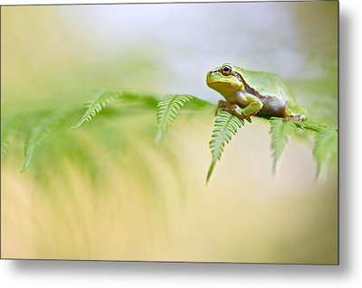 European Tree Frog Metal Print