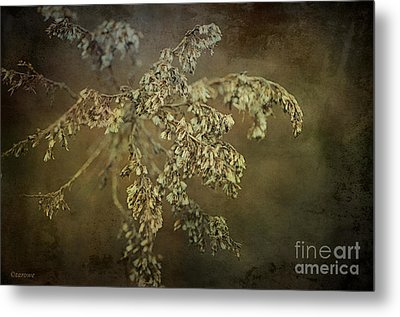 Even Weeds Are Beautiful Metal Print by Terry Rowe