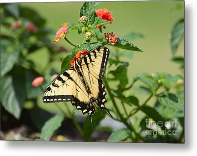 Evening Beauty Metal Print by Debbie Green