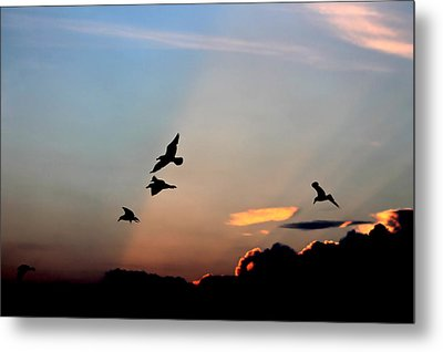 Metal Print featuring the photograph Evening Dance In The Sky by Bruce Patrick Smith