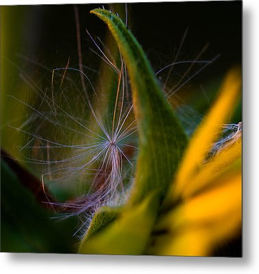 Evening Fluff Metal Print by Haren Images- Kriss Haren