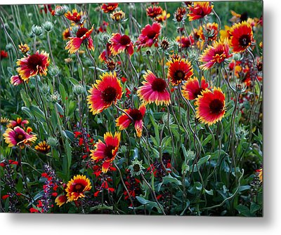 Evening In Bloom Metal Print
