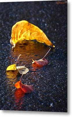 Evening Leaves On Wet Pavement Metal Print by Ronda Broatch
