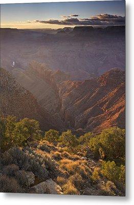 Evening Light At The Grand Canyon Metal Print