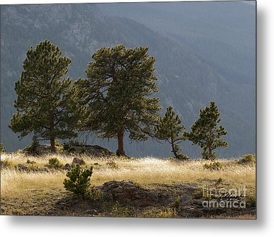 Evening Light On The Meadow Metal Print