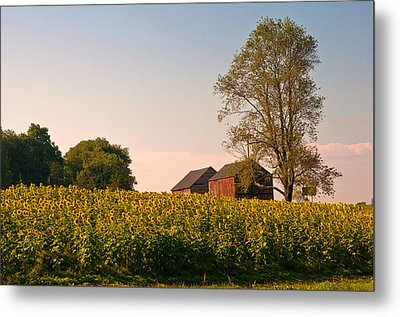 Evening On The Sunflower Farm Metal Print
