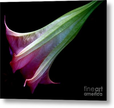 Evening Poetry Metal Print by Geri Glavis
