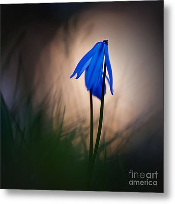 Evening Stars Metal Print by Uma Wirth