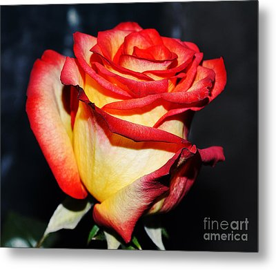 Event Rose 3 Metal Print