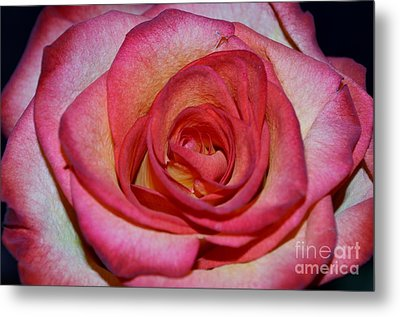 Event Rose Metal Print