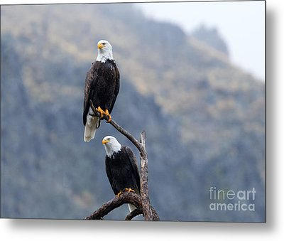 Ever Watchful Metal Print by Mike Dawson