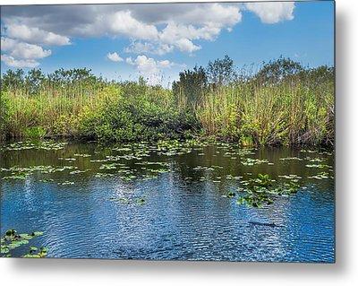 Everglades 0817 Metal Print by Rudy Umans