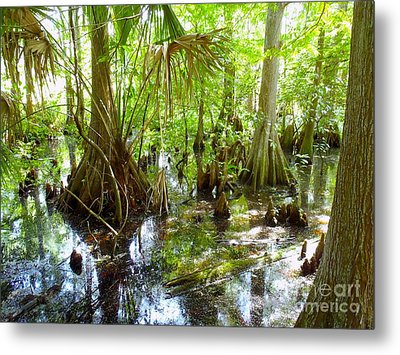 Everglades Metal Print by Carey Chen