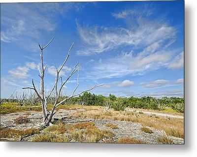 Everglades Coastal Prairies Metal Print by Rudy Umans