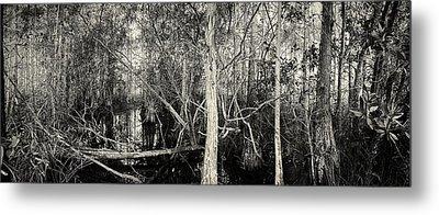 Everglades Swamp-1bw Metal Print