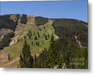 Metal Print featuring the photograph Evergreen Hillside by Charles Kozierok