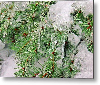 Evergreen Icicles I Metal Print