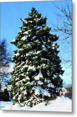 Evergreen In Winter Metal Print by Susan Savad