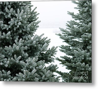 Evergreens Metal Print