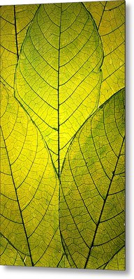 Every Leaf A Flower Metal Print by Robin Dickinson