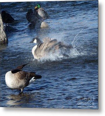 Everyone Duck Metal Print by Bobbee Rickard