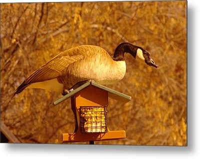 Everything Was Fine At The Bird Cafe Til Gordon The Goose Made A Pig Out Of Himself Metal Print by Jeff Swan