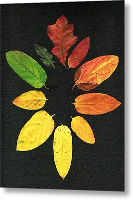 Evolution Of Autumn Bk Metal Print