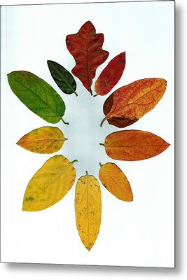 Metal Print featuring the digital art Evolution Of Autumn Wh by Pete Trenholm